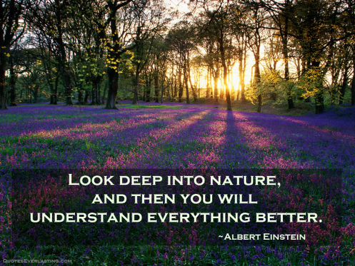 Quote Of Albert Einstein Quotesaga